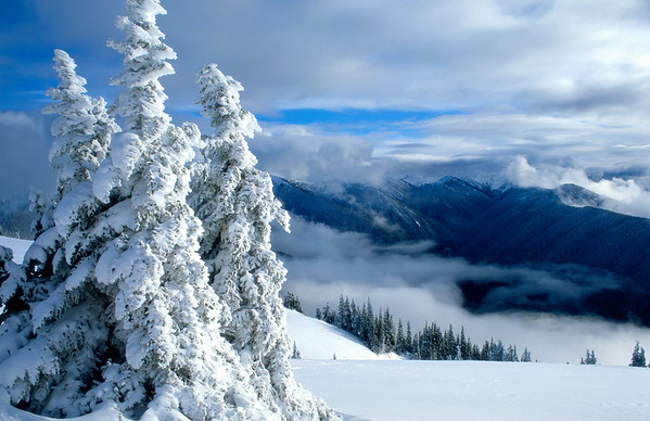 Winter at Hurricane Ridge