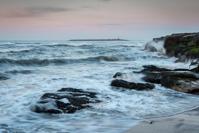 Coquet Island, Dawn