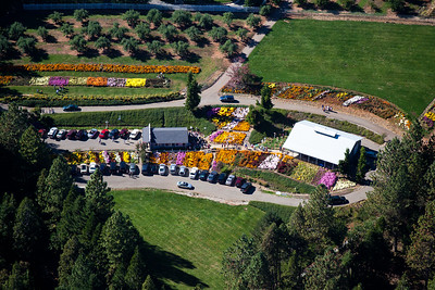 Apple Hill ~ Bill's Flowers
