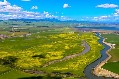 Mustard Field ~ Mt. Diablo