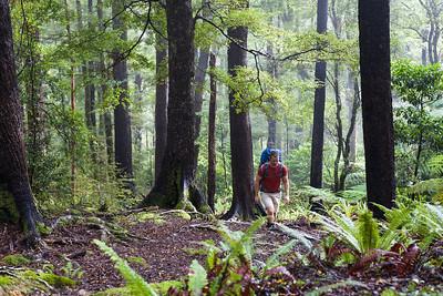 Mount Richmond Forest Park