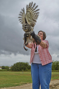 Sweet Thing releases rehabilitated Barred Owl at our Ranch.     2013