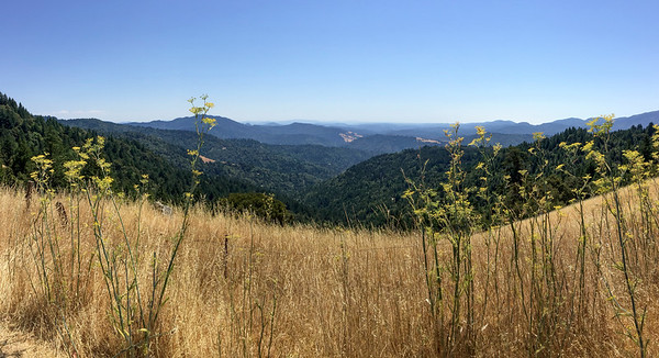 53,000 acres of redwoods!