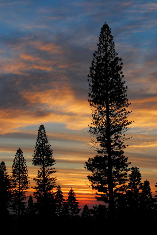 Cook Pines and Sunset - Lana'i, Hawaii