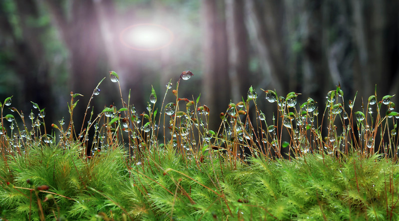 Early morning dew on Lamna'i forest floor.