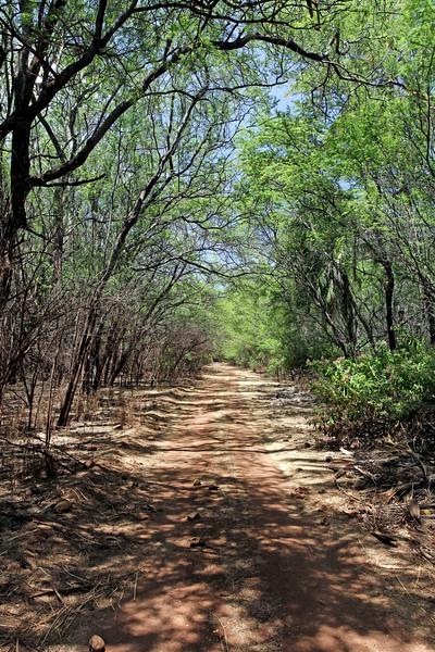Road to Keomoku - Lana'i, Hawaii