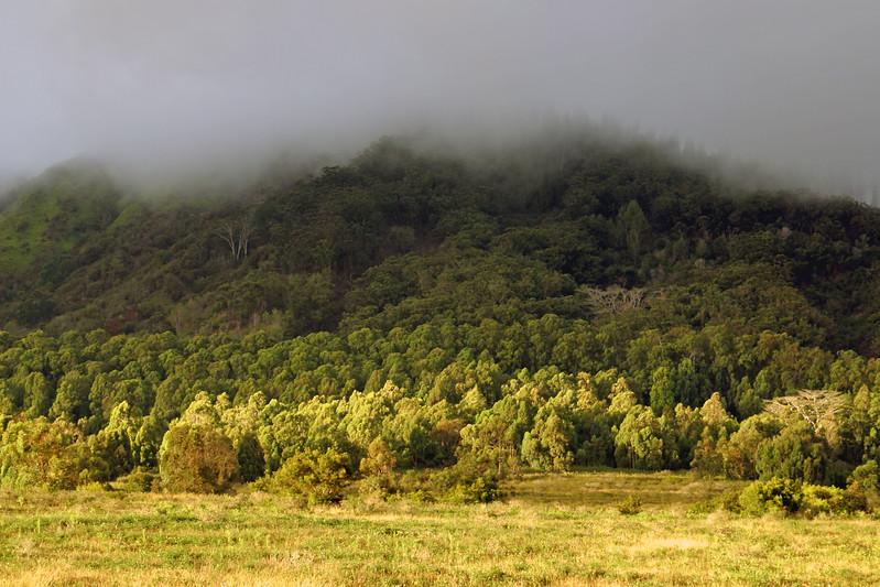 Mountain - Trees & Mist -  Lana'i, Hawaii
