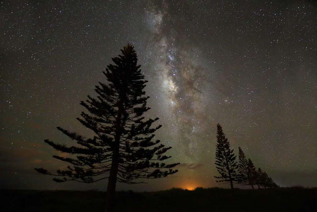 Cook Pines and Milky Way - Lana'i, Hawaii
