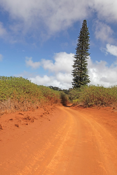 Road From Keahiakawelo (Garden of the Gods) to Lana'i City - Lana'i, Hawaii