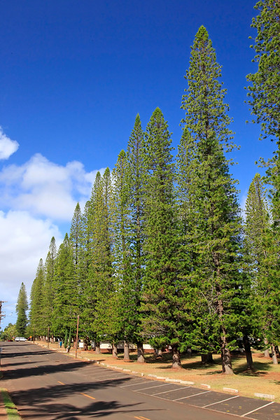 8th Street - Cook Pines - Dole Park - Lana'i, Hawaii