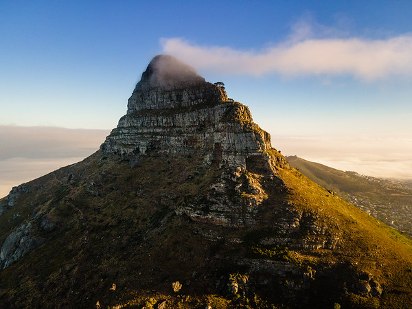 The Lion, Cape Town, South Africa