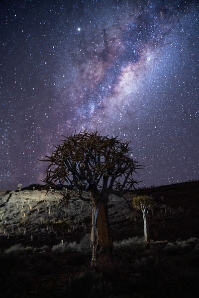 Quiver Tree Forest, Nieuwoudtville 2019