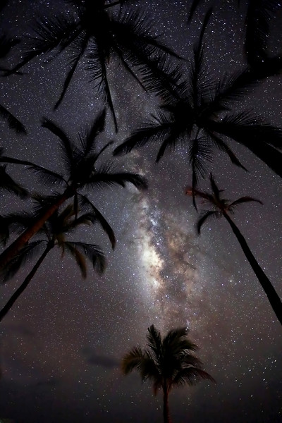 """Milky Way & Palm Trees"""