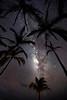 """Milky Way & Palm Trees"""