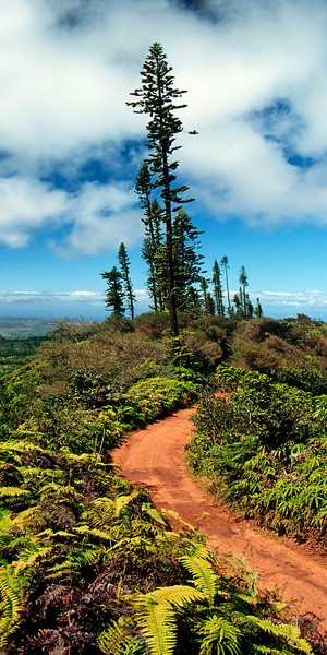 I shot this image, years ago, near the top of the Munro Trail, on the Island of Lana'i.   It's still one of my favorite images from my years on this remote and beautifull island.