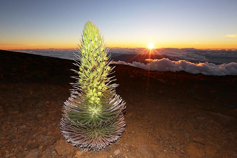 Silversword Sunrise at Haleakala II