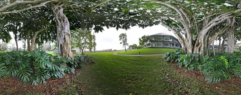 "The large Banyan Tree in front of the Four Seasons Koele Lodge Resort on the island of Lana'i in Hawaii.  Click on the link to load the 360 pano view.  <a href=""http://360pano.org/koele/banyan.htm"">http://360pano.org/koele/banyan.htm</a>"