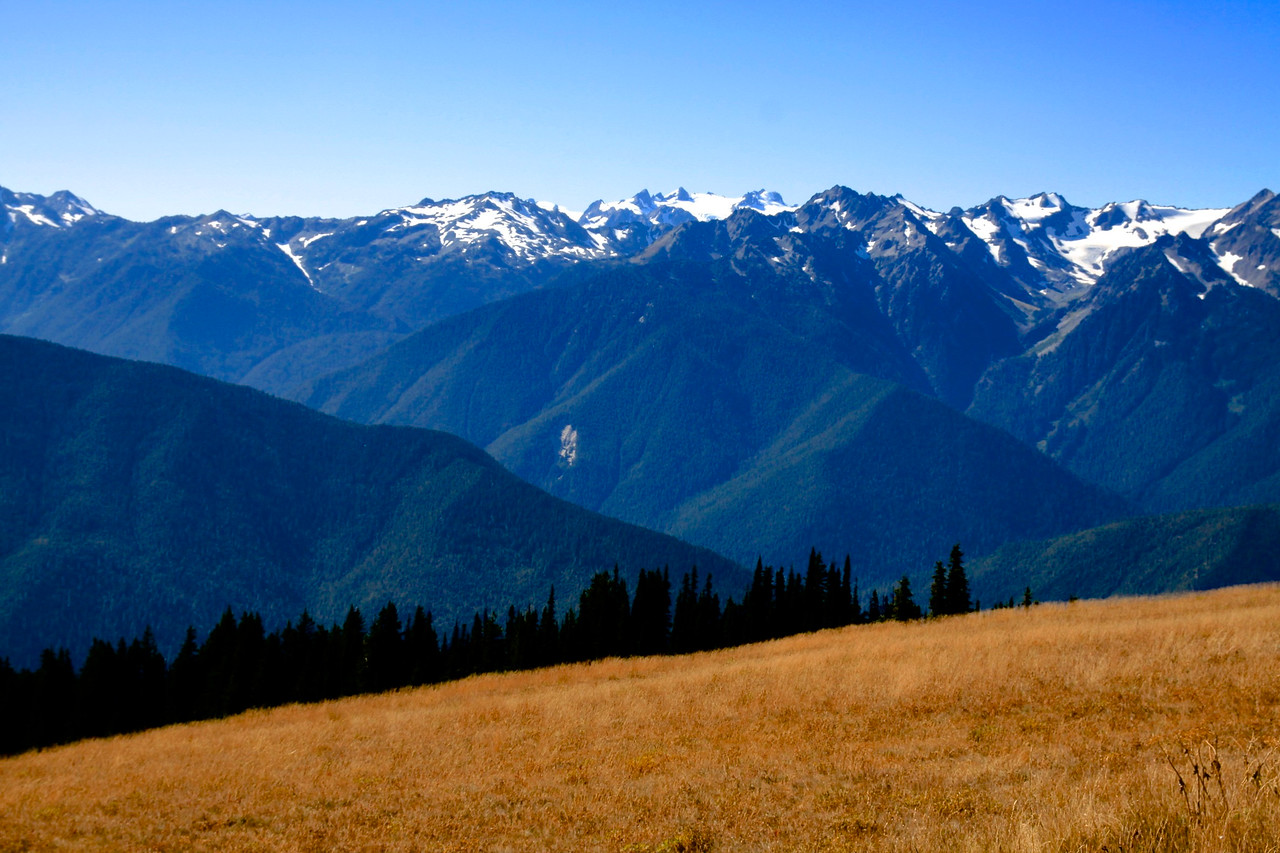Hurricane Ridge, Olympic Peninsula, Washington