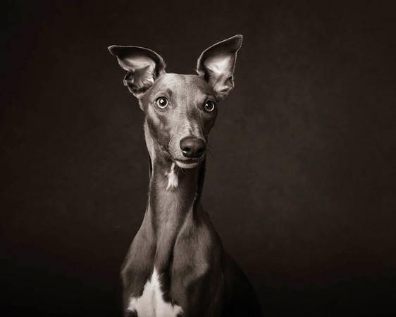 The Artful Dog Studio Ltd