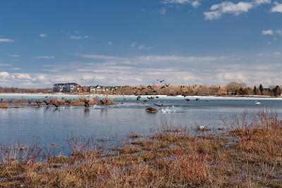 Urban Wetlands #2