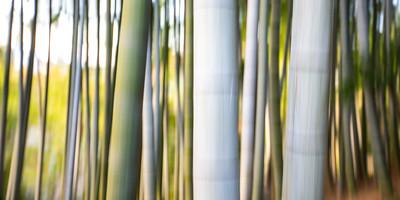 Bamboo Abstract • Kyoto