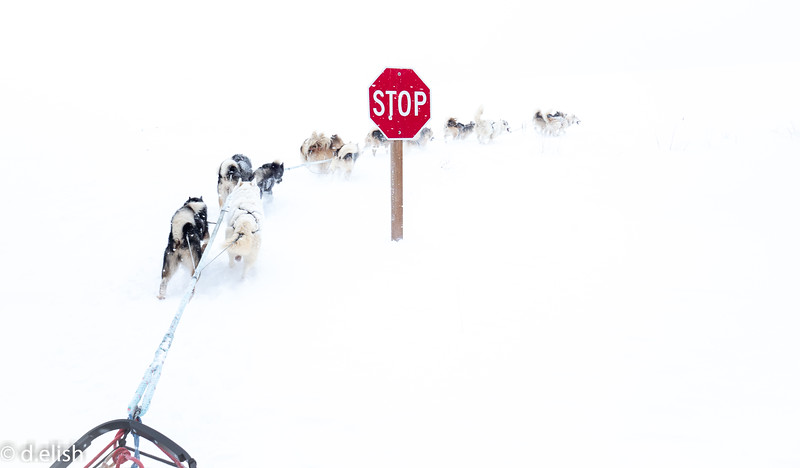 Dogs Don't Stop