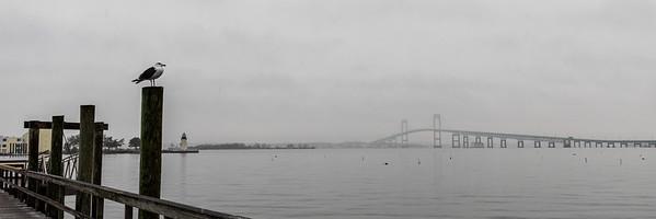 Seagull looking at the Newport Pell Bridge in Newport, Rhode Island