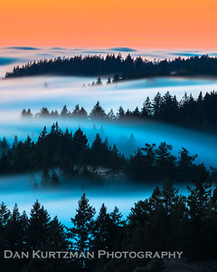 Mystical Mt. Tam