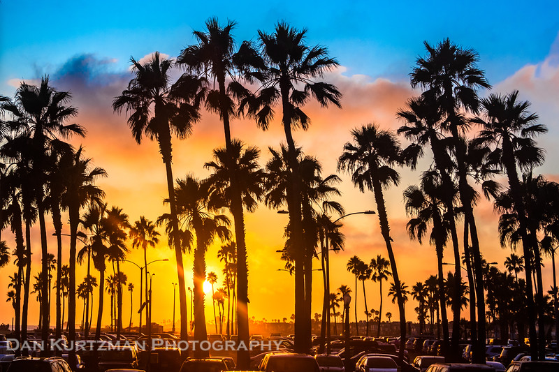 Southern California Palm Trees at Sunset