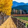 Napa Valley Autumn Colors
