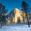 El Capitan Meadow Winter Morning