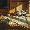 We had just received our custom floorcloths from Gracewood Design. When I saw the Sun had created an artful pattern across the floor, I set up my camera and tripod, then Jupiter walked over instinctively and posed.