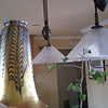 "This is the art glass pendant shade that we bought at Lundberg Glass Studios in Davenport  <a href=""http://www.lundbergstudios.com/shades/shades.html"">http://www.lundbergstudios.com/shades/shades.html</a>. Is is 8 inches tall and will hang above the sink. I am holding it up next to the pulley pendants over our island. I am trying to compare the two styles, hoping they complement each other. Too matchy-matchy is not good."