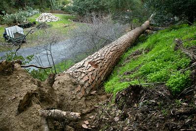 Pine Tree Saga