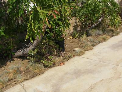 Northridge Front Landscaping
