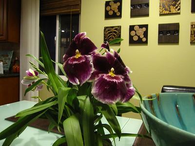 Orchids 2009