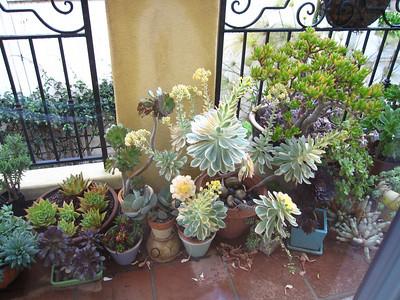 Patty's Plants 2010