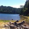 Lake Lagunitas