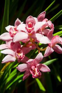 2010-0403_Orchids