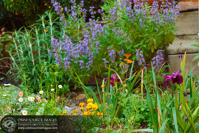 Spring Garden Flowers
