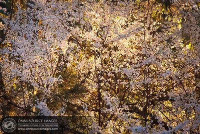 Back Yard Blossoms