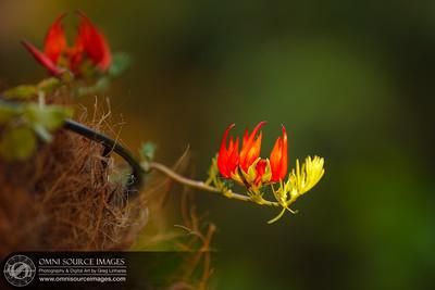 Garden_20120529_001