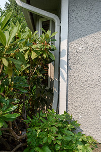 Detail - front west of door behind plant