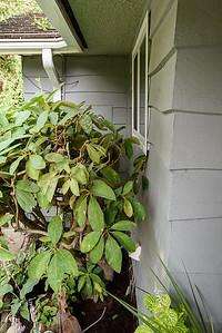 Detail - front east corner behind plant