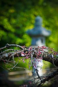 Japanese Tea Gardens, (Golden Gate Park, SF).