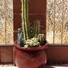 Diane's Cactus Gardens