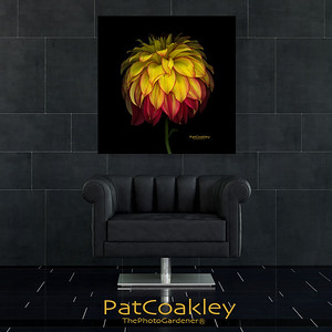 Stunning Yellow|Red Dahlia Wall Decor