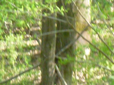 2012.03.25 Deer in the yard