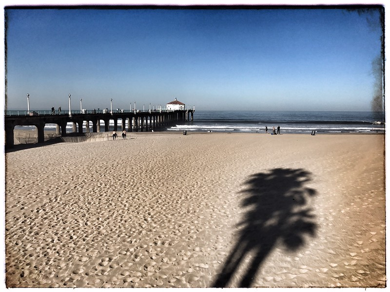 Palm Trees and the Pier