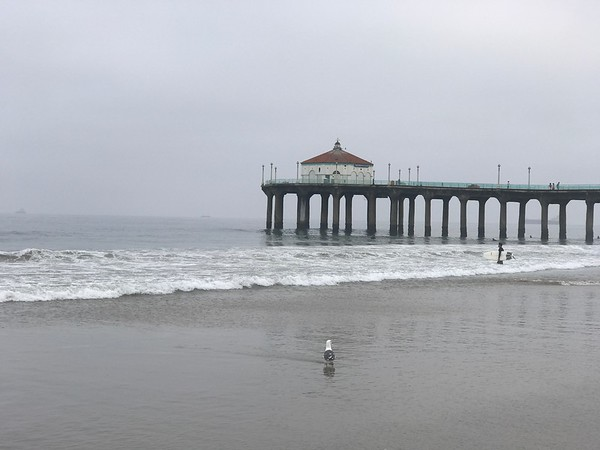 A Pier and a bird